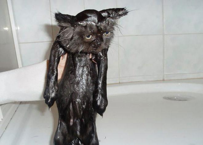 Кошки после водных процедур (17)