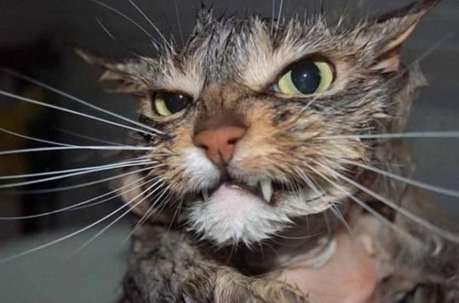 Кошки после водных процедур (5)