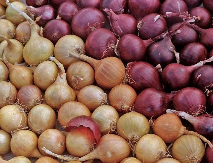 Полезные свойства лука, чем полезен лук (6)