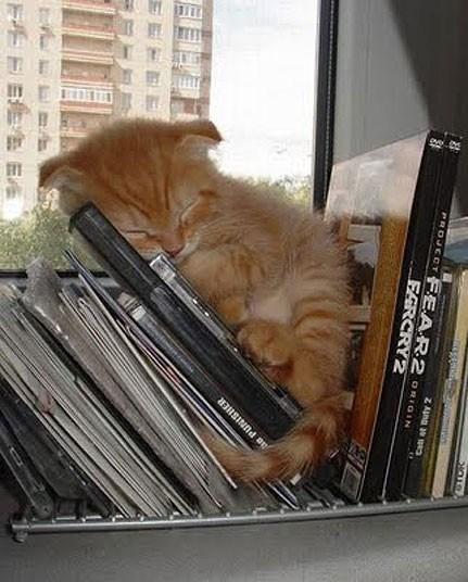 Кошки, спящие в странных местах (11)