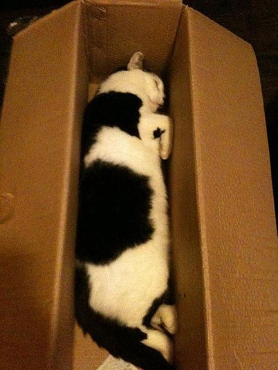 Кошки, спящие в странных местах (12)
