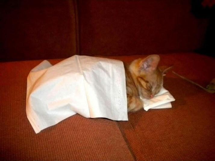 Кошки, спящие в странных местах (13)