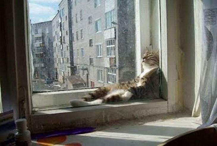 Кошки, спящие в странных местах (14)