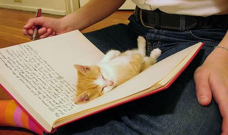 Кошки, спящие в странных местах (16)