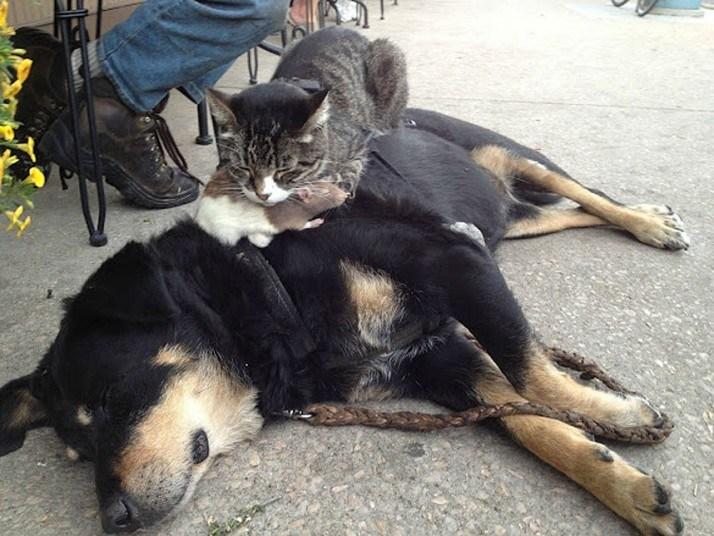 Кошки, спящие в странных местах (17)