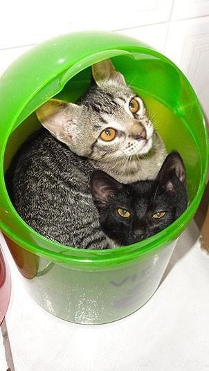 Кошки, спящие в странных местах (18)