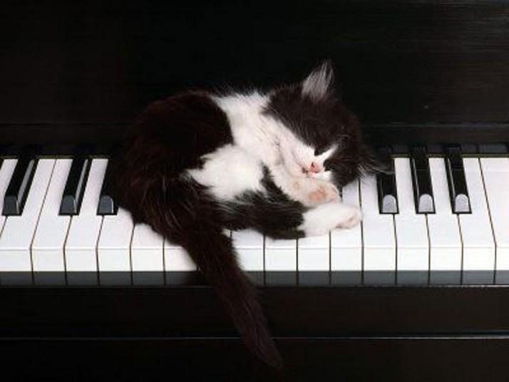 Кошки, спящие в странных местах (2)