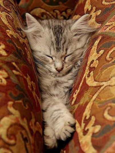 Кошки, спящие в странных местах (3)
