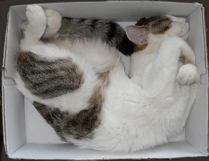 Кошки, спящие в странных местах (4)