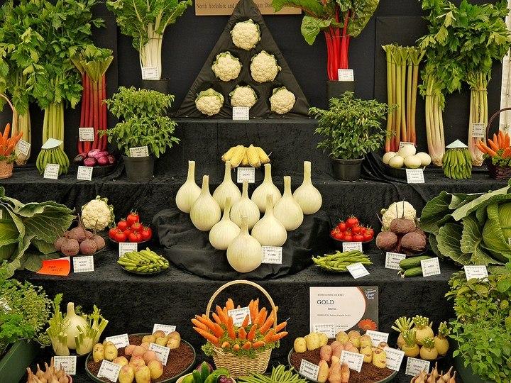 Красивые раскладки овощей и фруктов в магазинах (3)