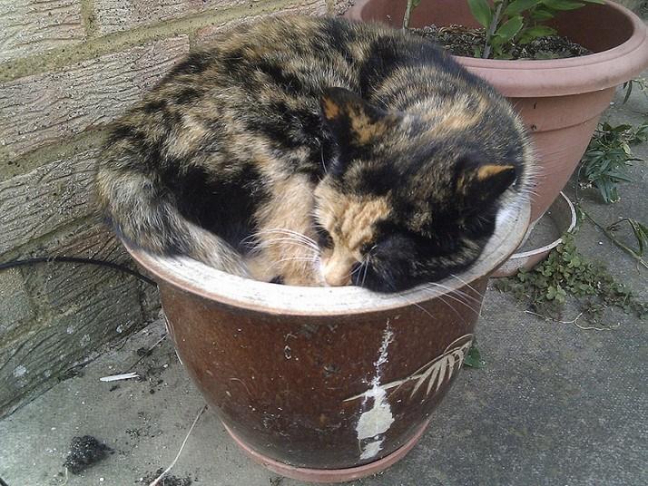 Кошки, спящие в странных местах (6)