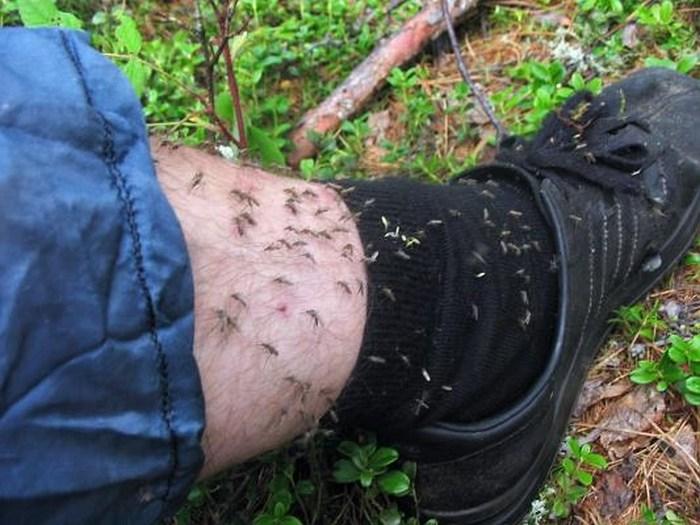 Как сделать ловушку для комаров (1)