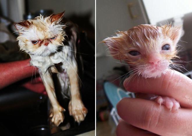 Кошки после водных процедур (10)
