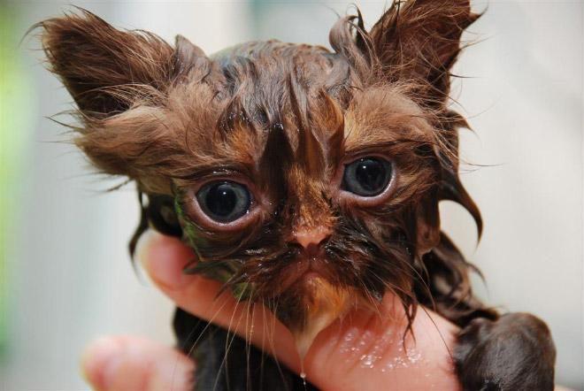 Кошки после водных процедур (11)