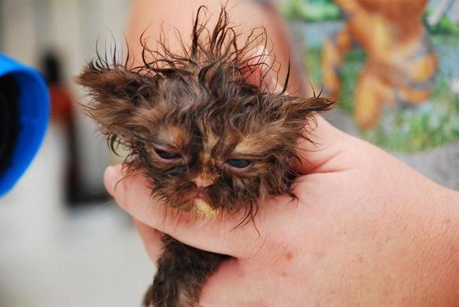 Кошки после водных процедур (12)