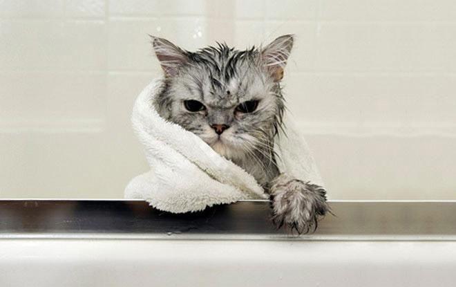 Кошки после водных процедур (13)