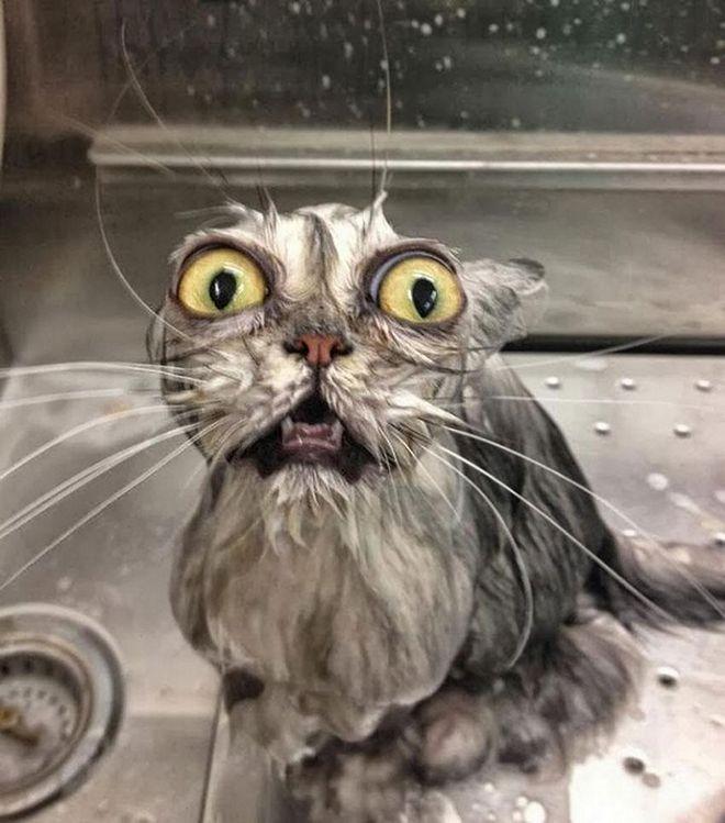 Кошки после водных процедур (1)