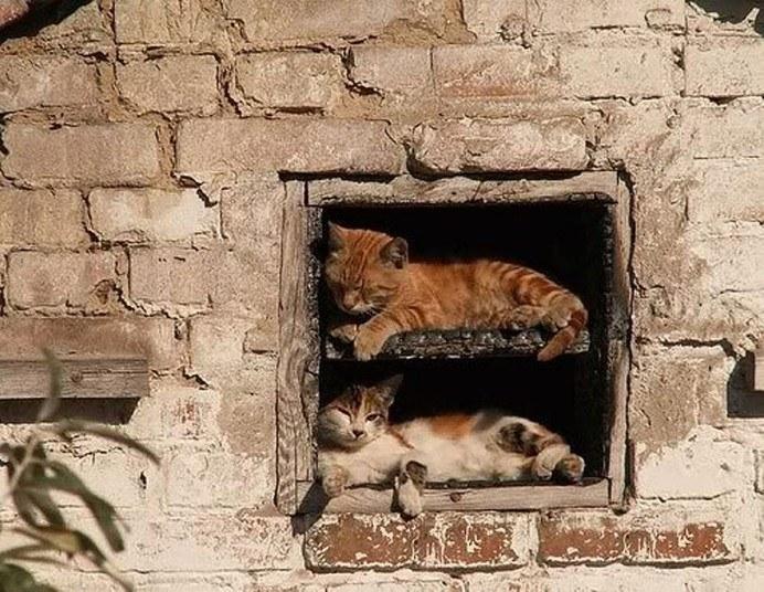Кошки, спящие в странных местах (15)