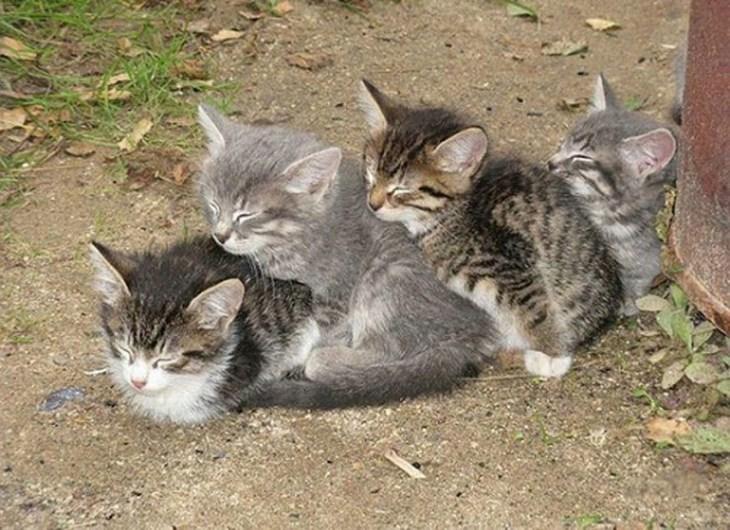 Кошки, спящие в странных местах (20)