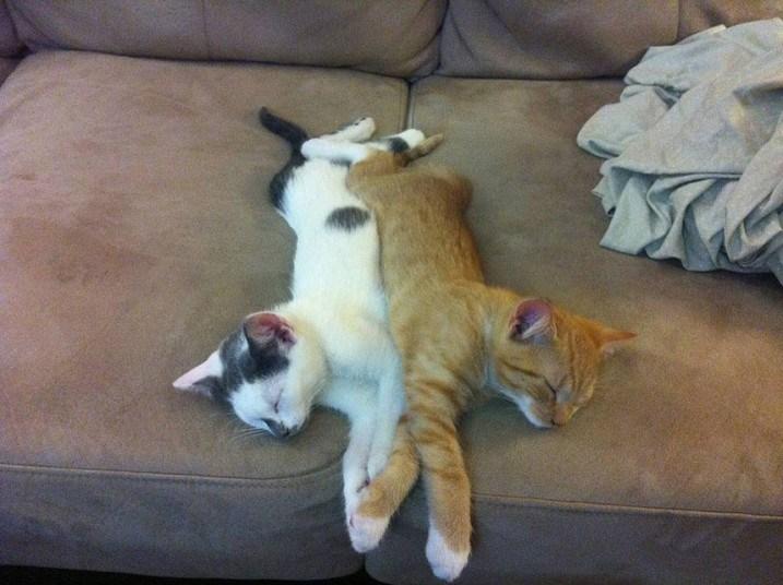 Кошки, спящие в странных местах (5)