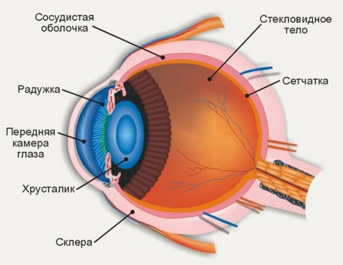 Почему ухудшается зрение. 5 причин (4)